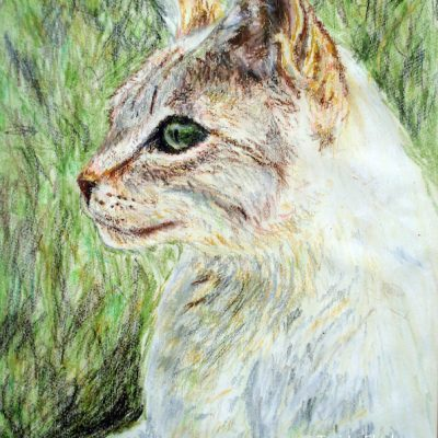 Cat in Sun drawn about age sixteen