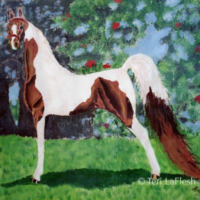 Pinto Saddlebred